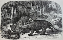 Nineteenth century depiction of dinosaurs