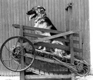 "Nicholas Potter's ""Enterprise Dog Power"" Treadmill (1881) for powering butter churns"